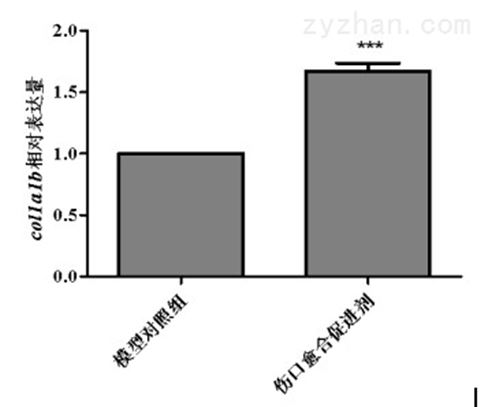 利用斑马鱼模型评价促进伤口愈合功效