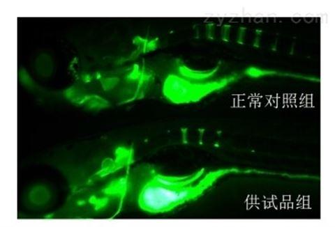 斑马鱼模型评价骨毒性