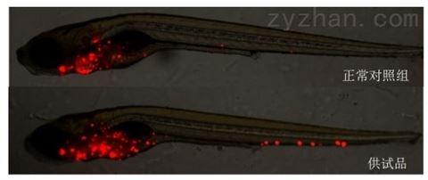 斑马鱼模型评价免疫毒性